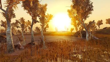 Zatar Wetlands II